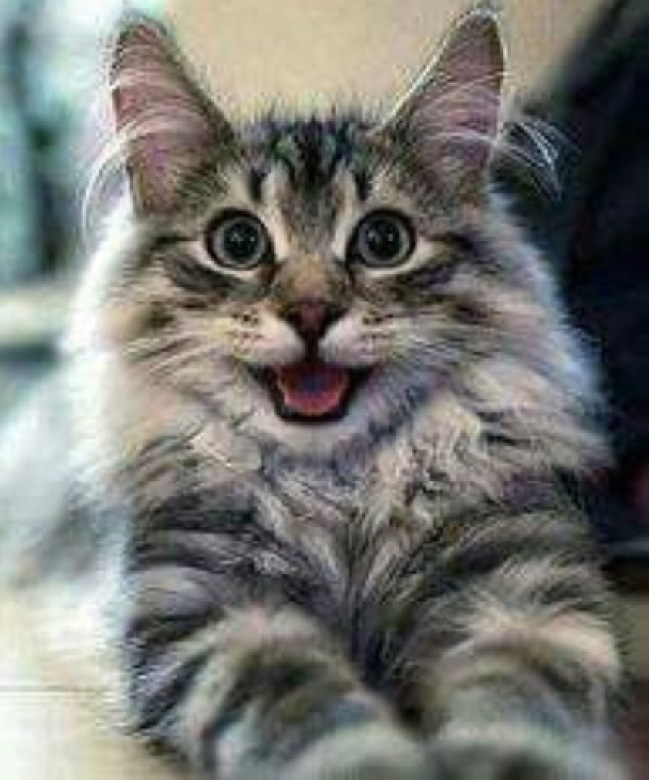happy catty copy