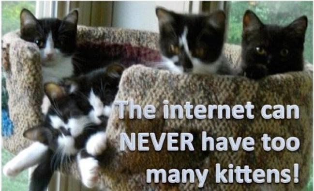 internet kittens lol