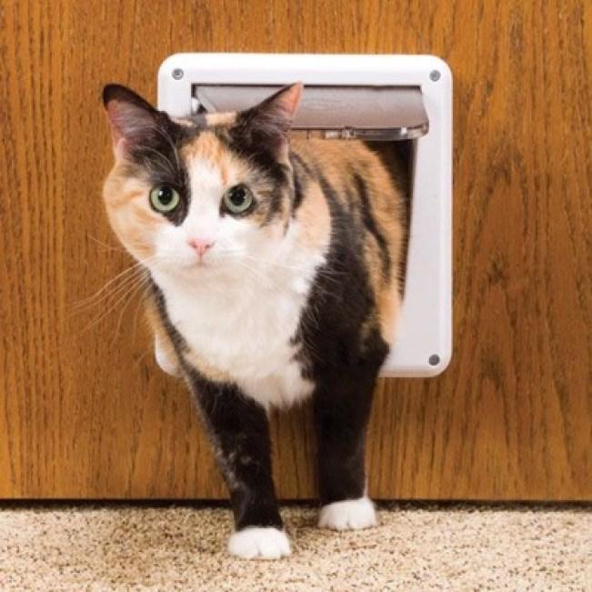 big-eyes-cat-door