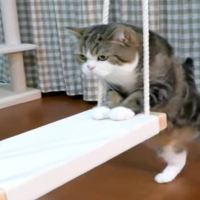 Maru the Cat Discovers a Swing