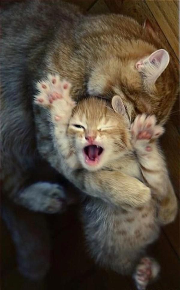 caption-kitten-scream