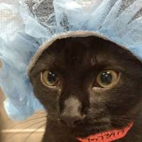 Cat Parents Receive Hilarious Picture of Their Kitty Before Surgery