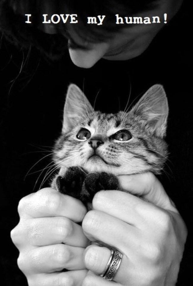i-love-my-human-cat