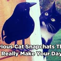 16 Hilarious Cat Snapchats That Will Really Make Your Day