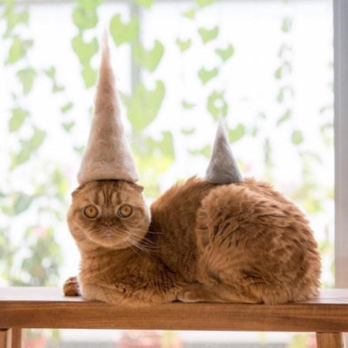 hats-2