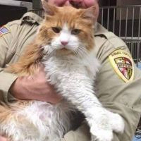 Giant Cat Arrives at Shelter, Within Hours Finds His Forever Home