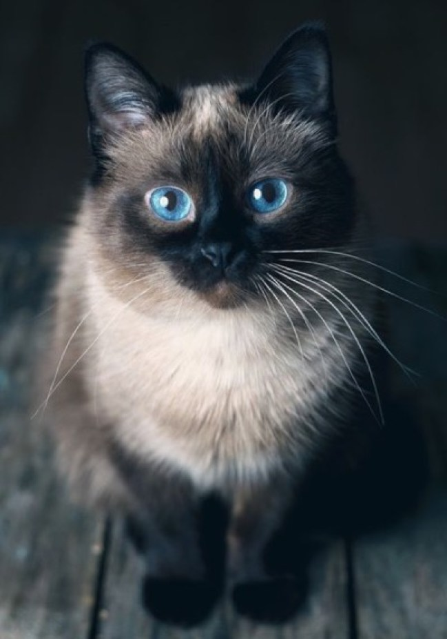 stunning-blue-eyes