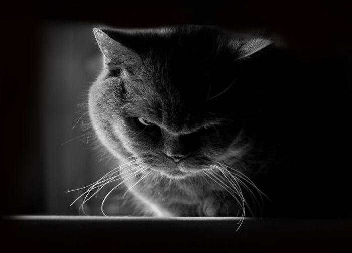 angry-4