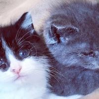 Tiny Kittens Found Holding Each Other Refused To Let Go
