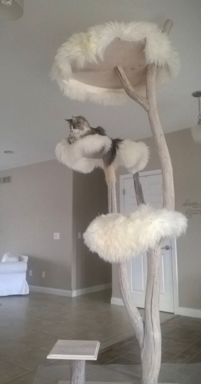 cat tree copy