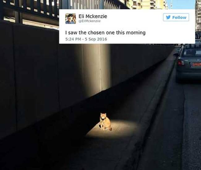 cat tweets 11