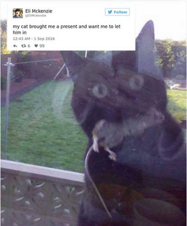 cat tweets 14