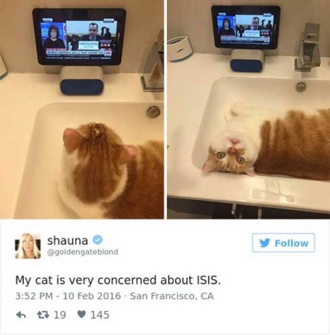 cat tweets 5