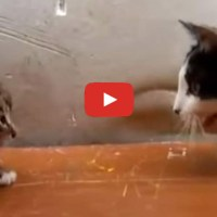 Mama Cat Tells Her Kitten It's Time For Dinner