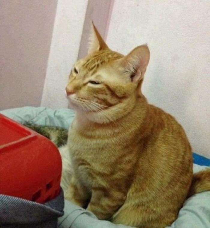 CAT DAD 1