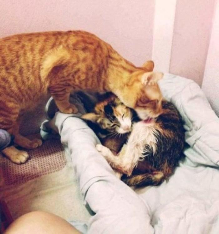 CAT DAD 2