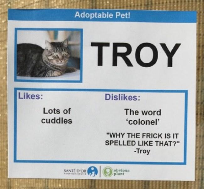 cat cards 15