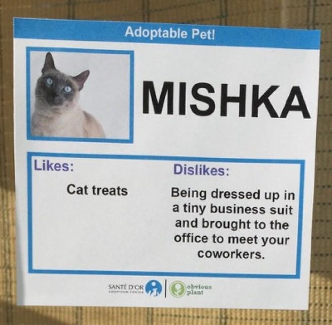 cat cards 9