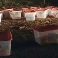 Rescuers Are Shocked to Find 14 Tubs Left Outside Animal Shelter