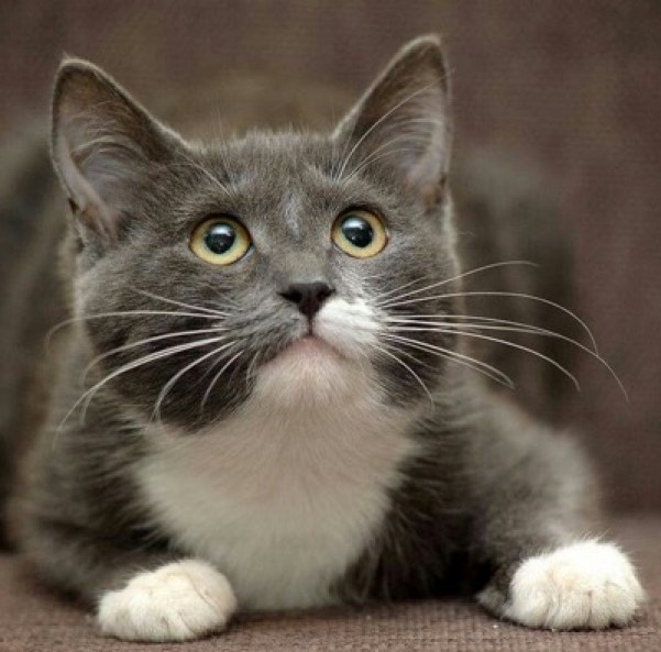 adorable grey and white