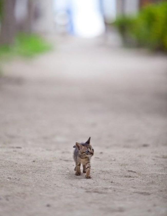 having a stroll