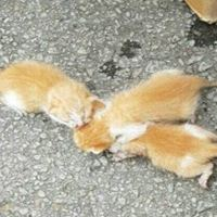 A Note Left on a Car Saved the Lives of Three Kittens