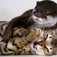 When Sam the Cat Met Pip the Otter