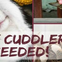 Looking For a New Job? This Vet Clinic Is Seeking A Professional 'Cat Cuddler'