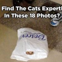 Can You Find the Cats Expertly Hiding in These 18 Photos?