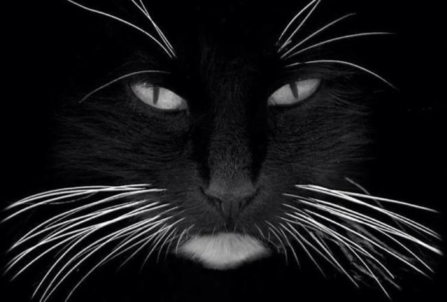 fabulous whiskers!