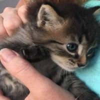Couple Find Stray Kitten in the Woods and She Finds Her Forever Home
