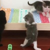 Adorable Kittens Love Their New Bed