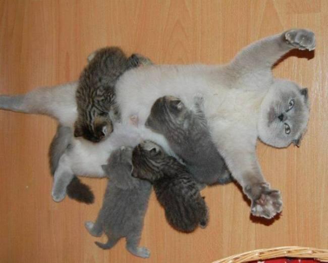 I surrender to kittens