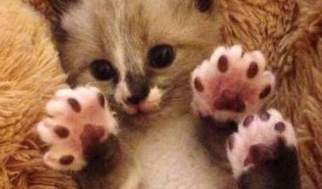 Jelly beans !!