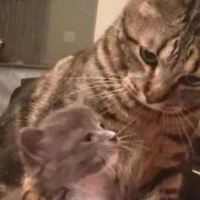 Rescue Cat Welcomes Stray Kitten And Teaches How To Cuddle Everyday