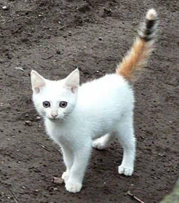 cutest-kitten-tail-