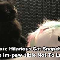16 More Hilarious Cat Snapchats That Are Im-paw-sible Not To Laugh At