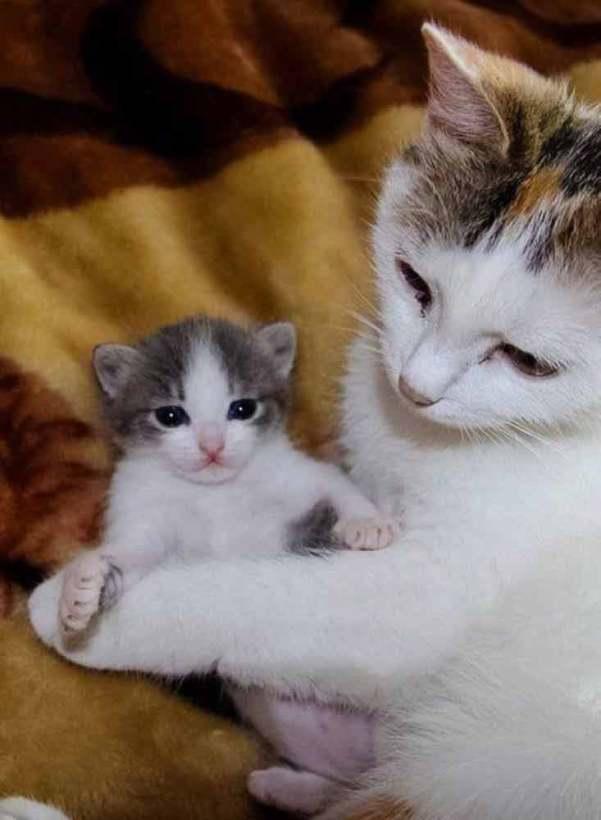 Have-you-met-my-new-kitten--