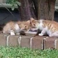Woman Found Blind Twin Kittens That Guide Each Other Through The World