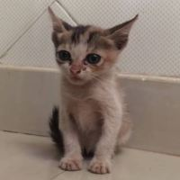 Story of a Little Stray Kitten Who Cries Real Tears