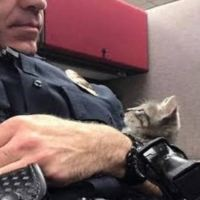 Cop Finds Stray Kitten Under Lamp Post And Now Kitten Has A New Dad