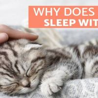 Why Does My Cat Sleep With Me? - 5 Reasons You'll Love to Know
