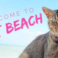 Welcome To Cat Beach Sanctuary!