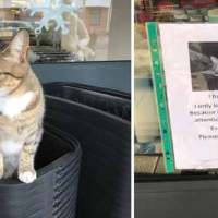 This Cat Pretends To Be A Stray To Get Free Food From Shoppers
