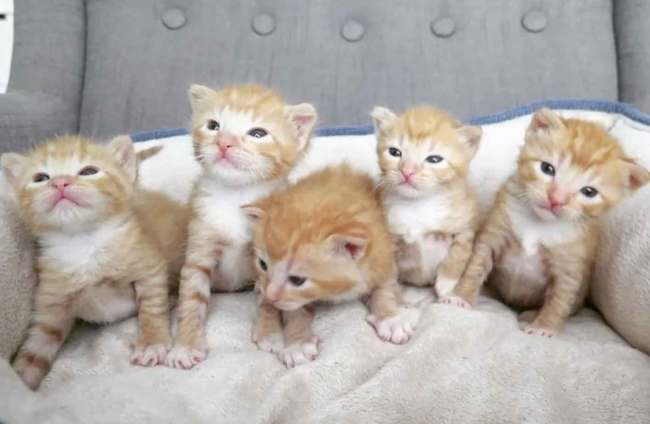 5gingers-1