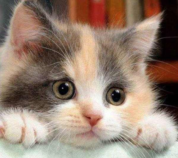 cutey