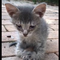Sad Kitten With Special Feet Walks Up To Woman And Asks For Help