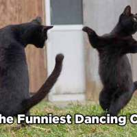 15 Of The Funniest Dancing Cat Pics