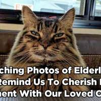 10 Touching Photos of Elderly Cats That Remind Us to Cherish Every Moment With Our Loved Ones