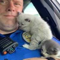 Kittens Can't Stop Cuddling Police Officer Who Saved Them